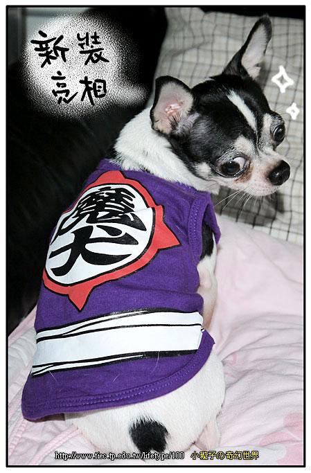 201012dog_0.jpg